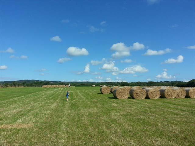 80 Acres Grassland Gaynestown Stud Wexford