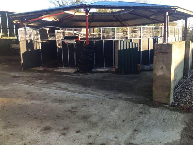 Horse Walker - Jonathan Fogarty Racing Wexford