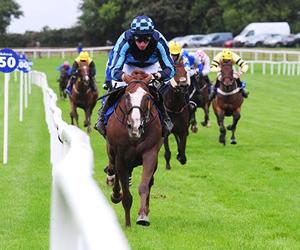 National Hunt Racing - Jonathan Fogarty Racing Wexford
