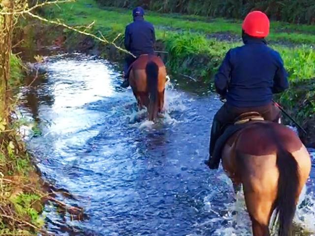 Stream - Jonathan Fogarty Racing Wexford